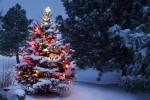 Wendy Wilson's 2013 Christmas Break Update