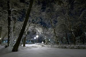 Snow and Moonlight